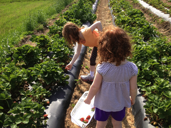 Strawberries | Mommy and Me Monday | The 171st ed
