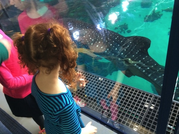 Why You'll Love Behind the Scenes Tours at the Georgia Aquarium | Mommy and Me Monday | 215th ed