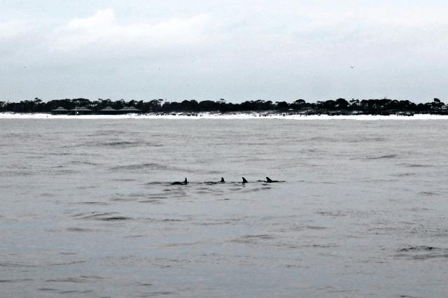 Dophin Sunset Cruise