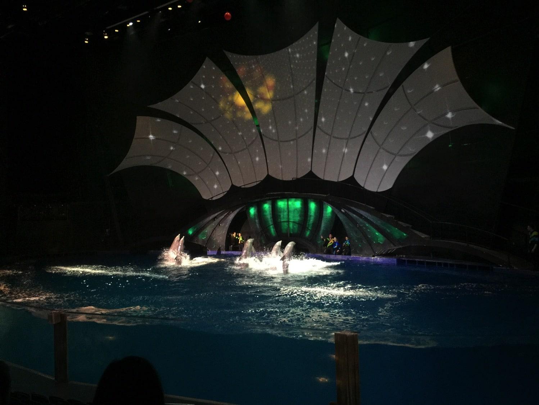New dolphin show at the Georgia Aquarium