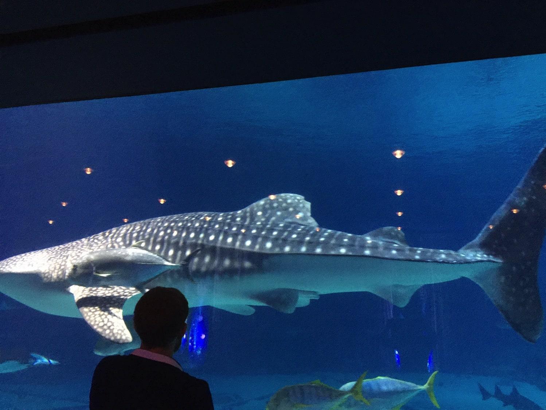 geogia aquarium 10th anniversary
