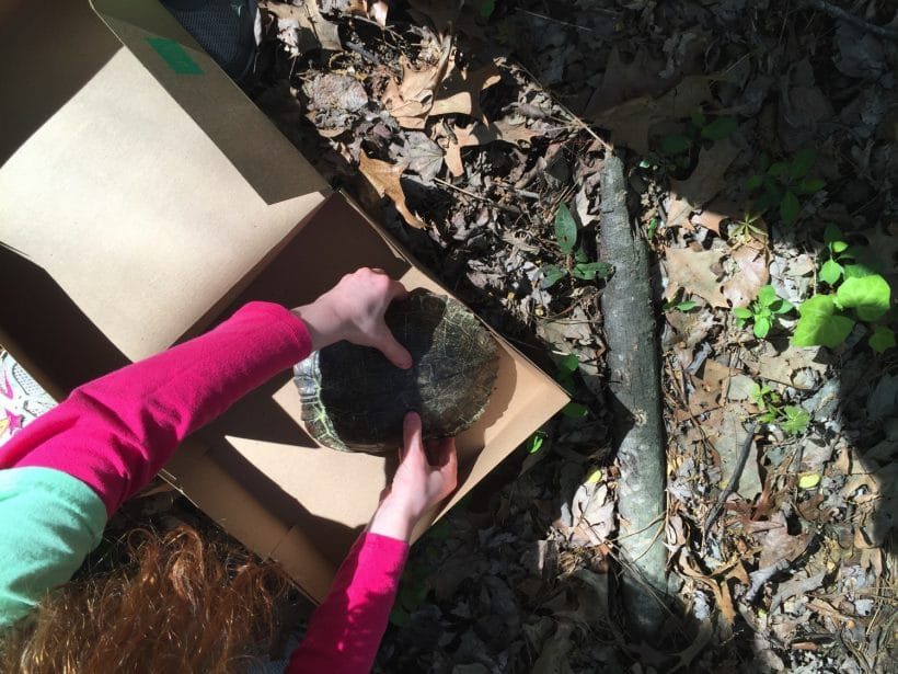 The great turtle rescue | Mommy and Me Monday 320th ed