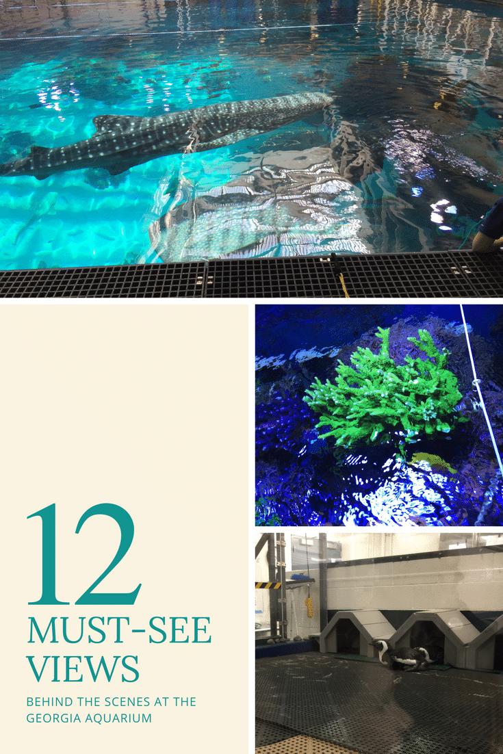 12 sights behind the scenes at the georgia aquarium