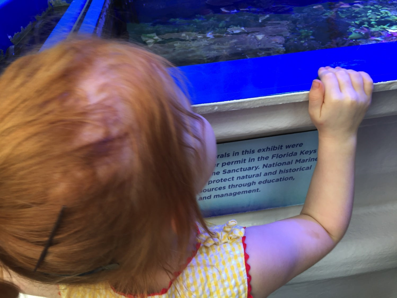 Georgia Aquarium Behind the Scenes