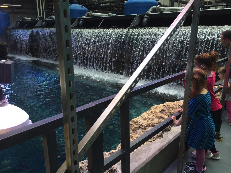 Water dump tropical diver
