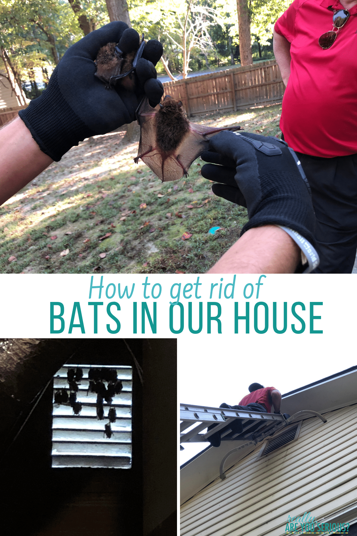 Get rid of bats in house