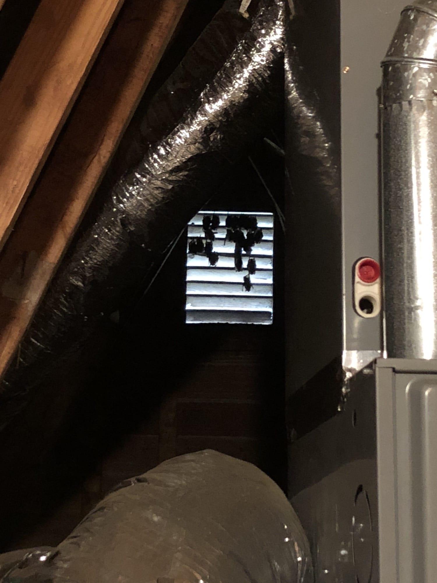 our friendly attic bats